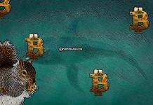 velryba-hodl-krypto