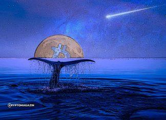 bitcoin-velryba-moon