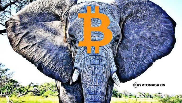 Syndrom cirkusového slona v kryptosvětě – Zoo se rozrůstá, kromě velryb již máme i slony!