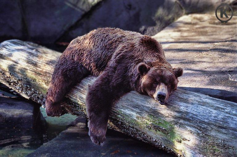 [HODL] Medvěd ulehl k zimnímu spánku! Neuvěřitelný růst BCH