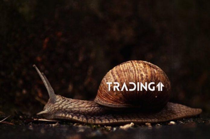 slimak trading11