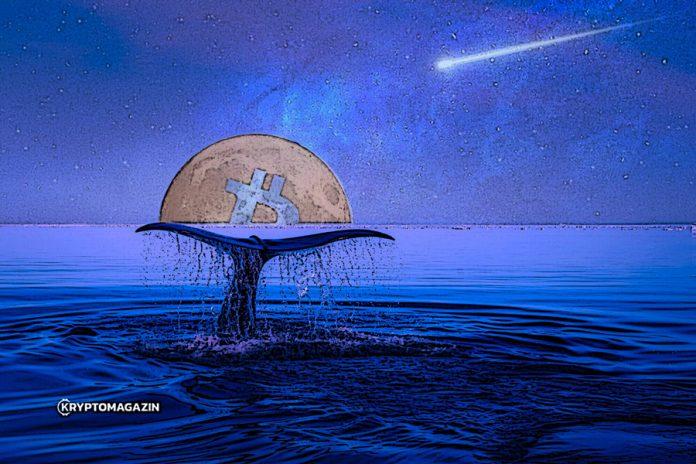 Fundstrat Global Advisors: Velryby ve velkém kupují Bitcoiny – Toto rallye teprve začalo!