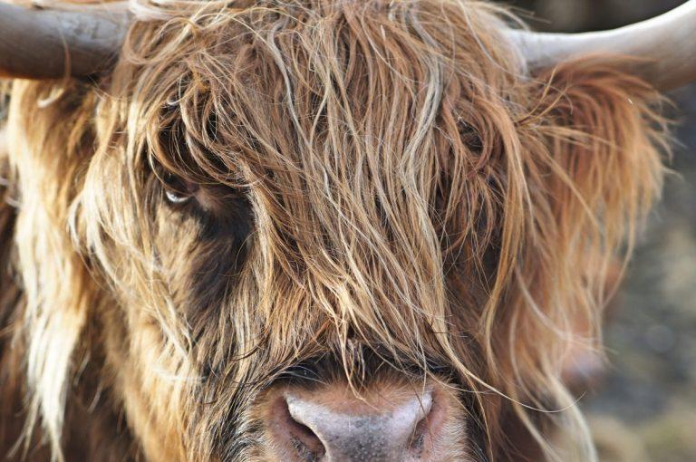 Čtyři důvody, proč nastane bull-run