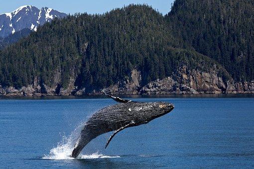 Bull run 2017 – studie o manipulaci jednou velrybou je údajně nesmyslná