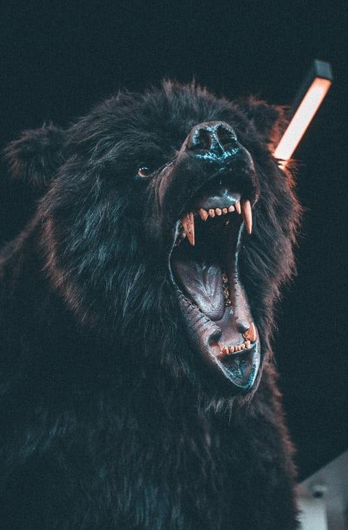 Když útočí medvědi – 2. díl