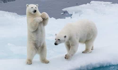 Když útočí medvědi- 4. díl