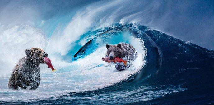 medvědi, ryby, voda