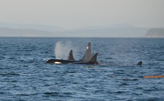 Další velryby přesouvají BTC