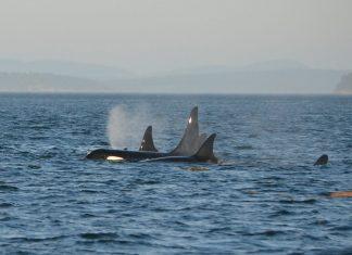 velryby, oceán