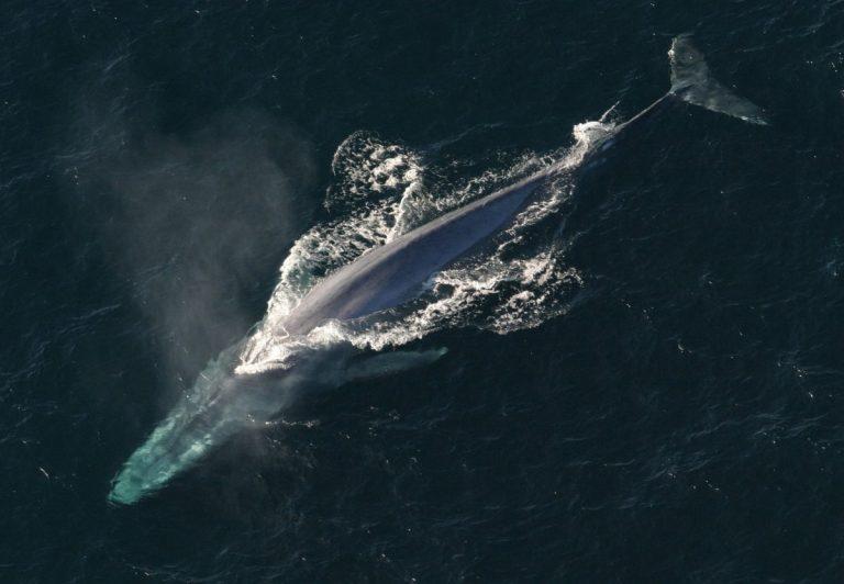 Jak je to s velrybami, které drží přední kryptoměny?