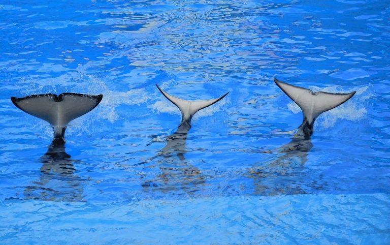 Velryby pokračují v akci – přesuny BTC na Binance, Bitfinex a Gemini