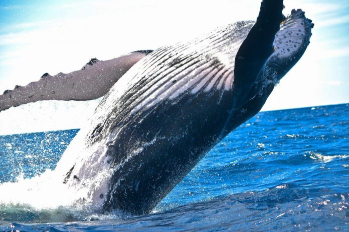 velryby, altcoiny, kryptoměny