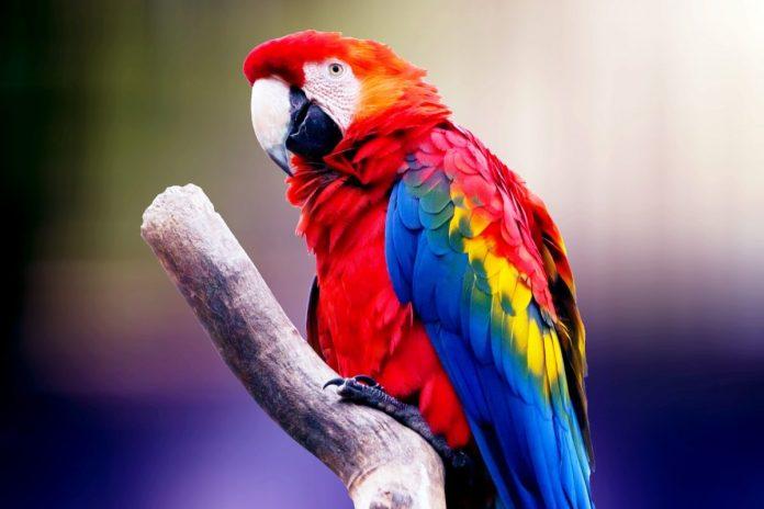 papoušek, kryptoměny, zodpovědnost