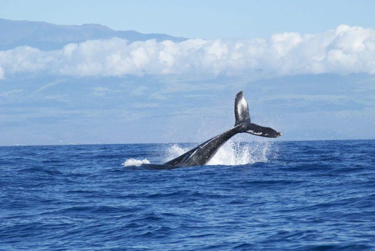 XRP a BTC velryby opět úřadují