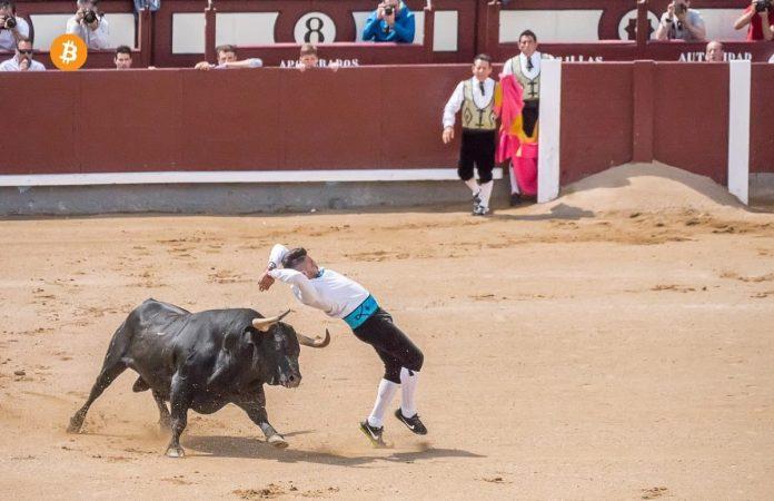 býk, bulls, longy