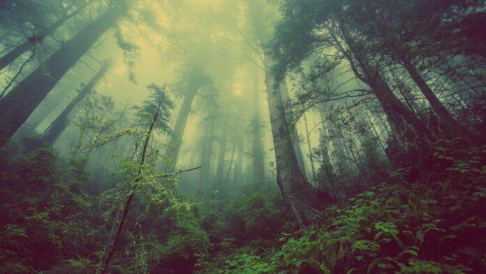 životní, prostředí