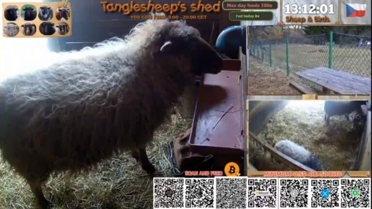 Český inženýr umožňuje uživatelům krmení ovcí online pomocí kryptoměn