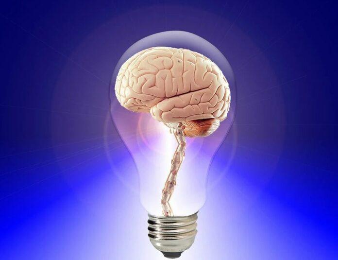 idea myslenka mozek
