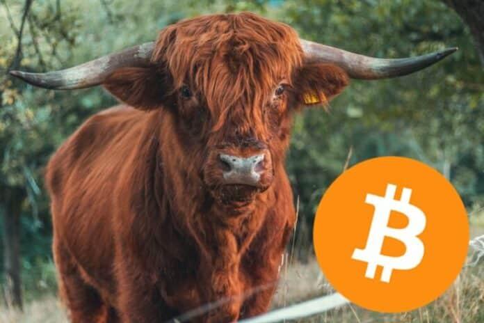 Bitcoin, býk
