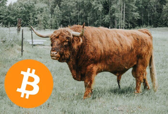býk, Bitcoin, logo