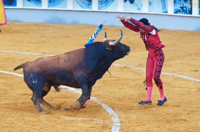 byk toreador bull