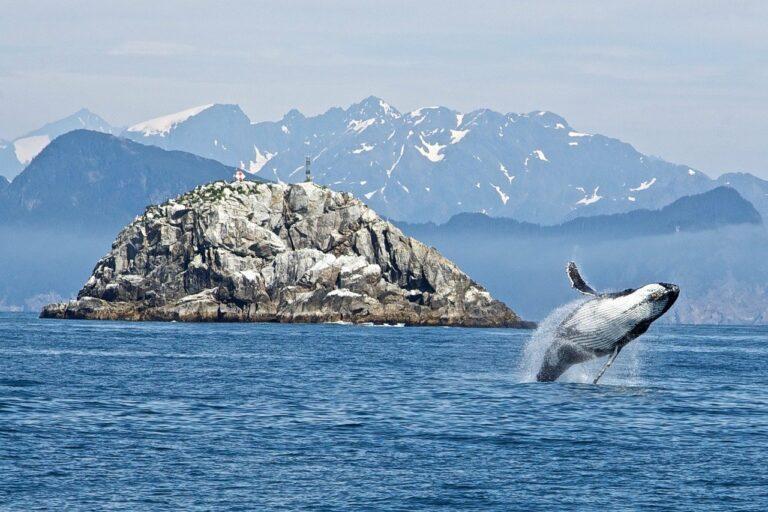 Data poukazují na aktivitu velryb těsně před propadem bitcoinů