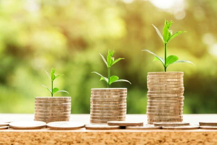 mince, rostliny