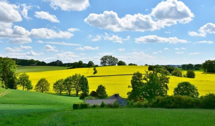 zemědělství, pole