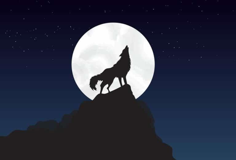 Vlk z WallStreet Jordan Belfort věří, že Bitcoin brzy dosáhne 100 000 USD