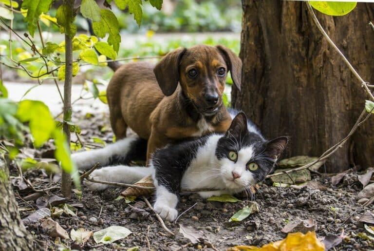 [Čtení na víkend] Pes, nebo kočka – Který typ investora je vám bližší?