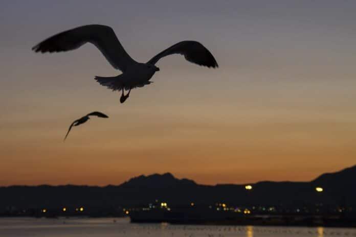 ptak ptaci bird vecer kryptomagazin