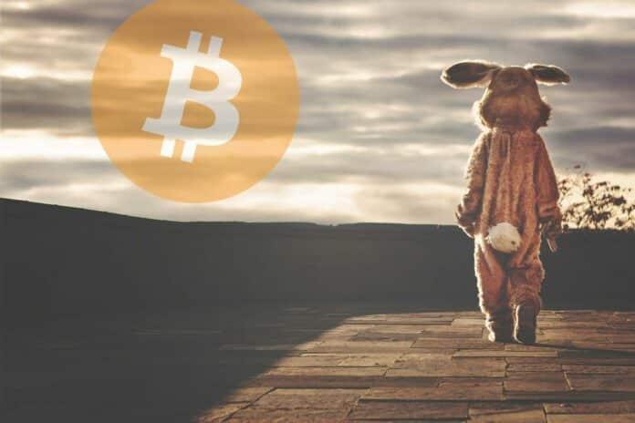velikonoce vecer zajic rabbit bitcoin